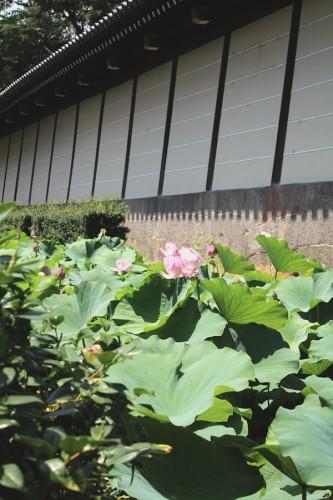 higashi honganji2