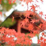 【京都洛南】お茶で有名な宇治は平等院だけでなく萬福寺もおすすめです