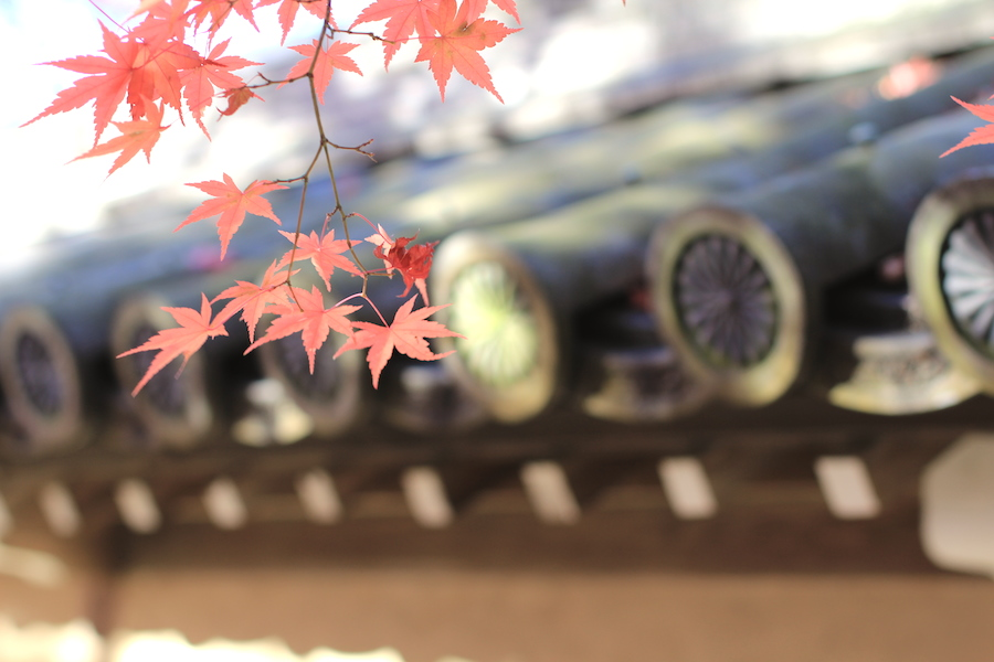 eikando autumn3