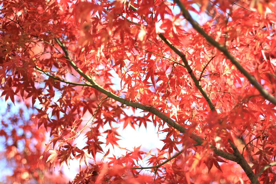 【京都洛東】もみじの永観堂はその名にふさわしい寺院です