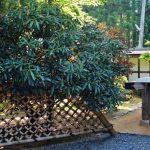 【和歌山】高野山 小寺院拝観もおすすめ