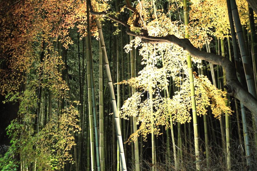 arashiyama hanatoro1