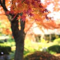 【京都洛西】日本最大の禅寺「妙心寺」と近くの自然食レストラン「おからはうす」