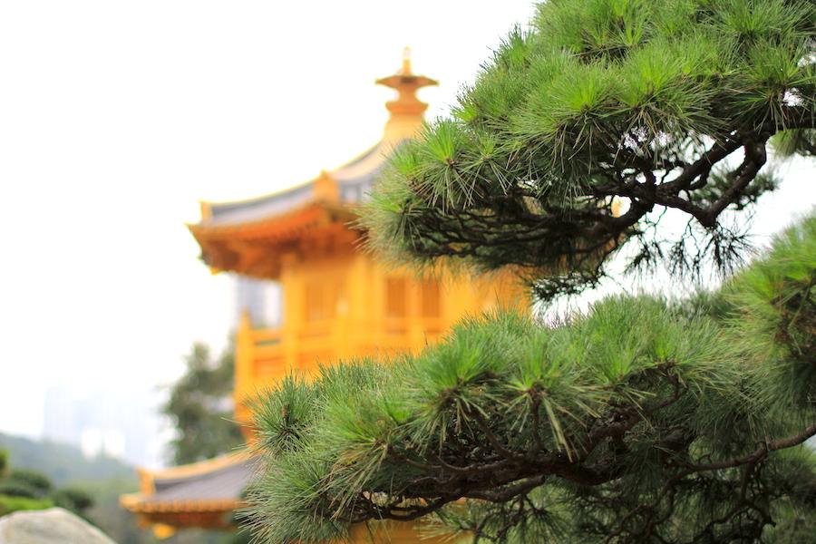 【香港】南蓮池園(Nan Lian Garden)を訪れたら併設されたベジタリアンレストランでランチがおすすめ