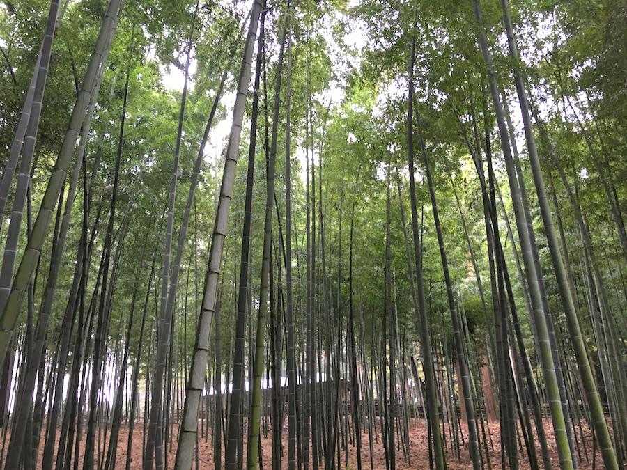 kairakuen bamboo2