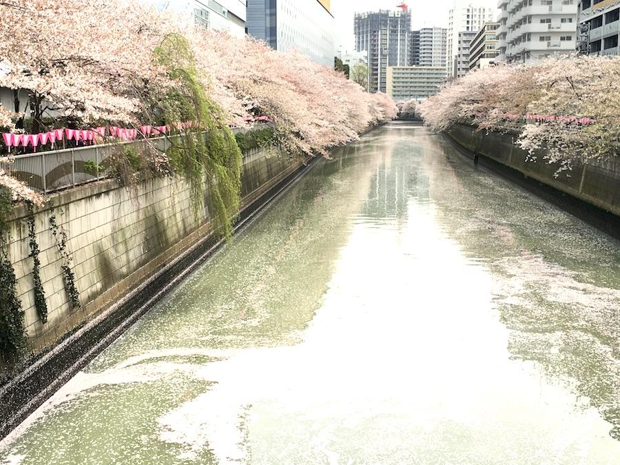 meguro river1