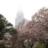 【東京】桜の名所「新宿御苑」では雨の日ラバーブーツが必須