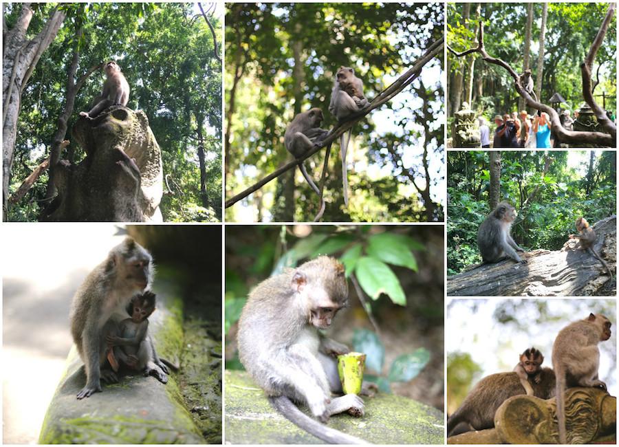monkeyforest monkeys
