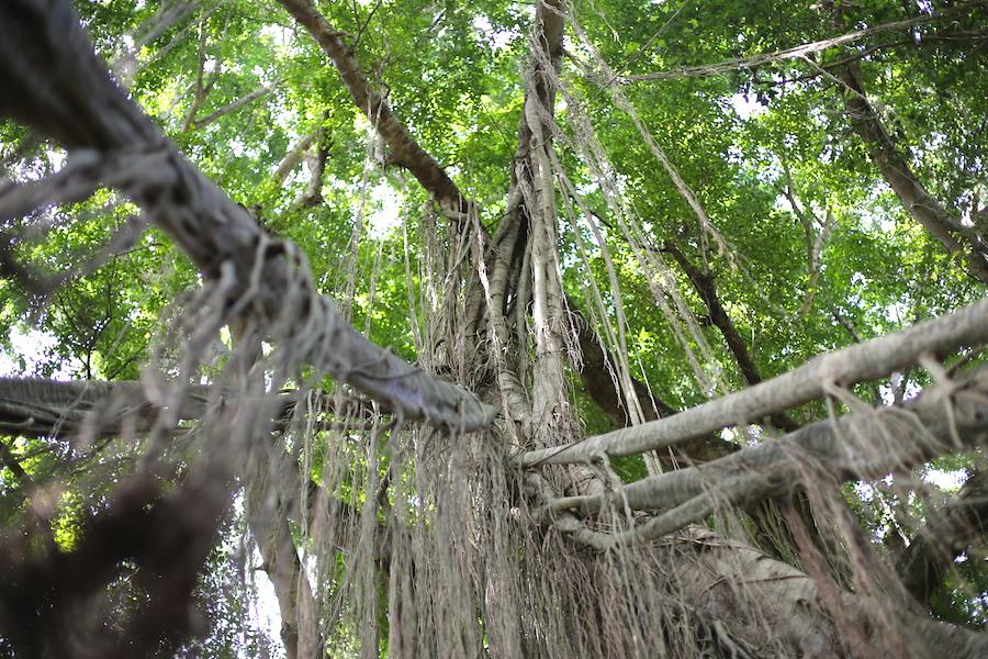 monkeyforest10