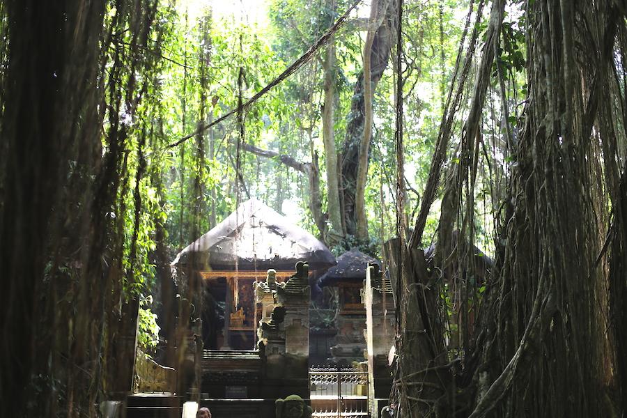 monkeyforest4