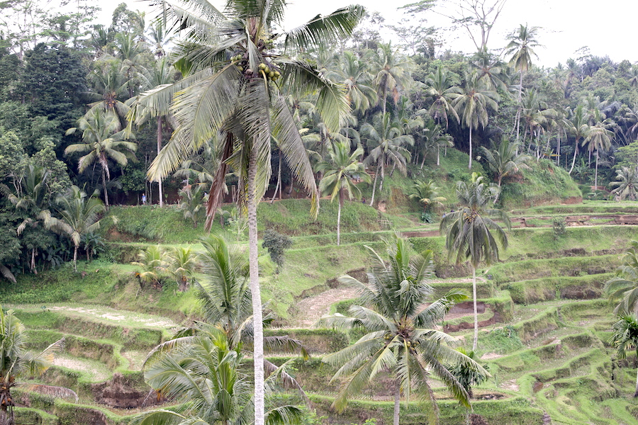 tegalalang-rice-terrace1