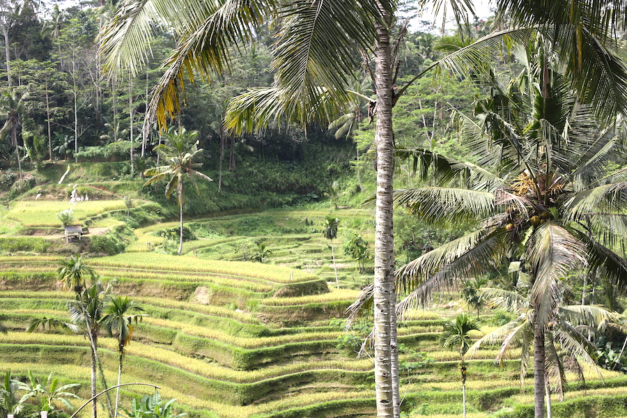 tegalalang-rice-terrace2