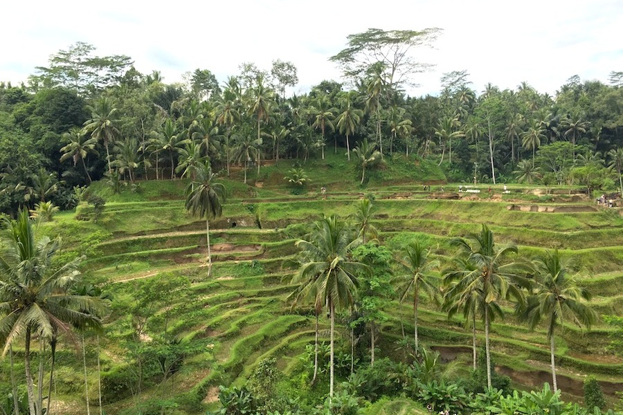 tegalalang-rice-terrace3